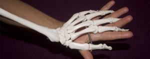 Slider_Bones-for-Life_autunno2015